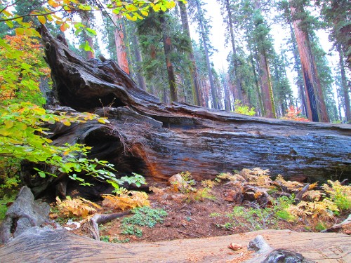 Sequoia Kings Canyon NP