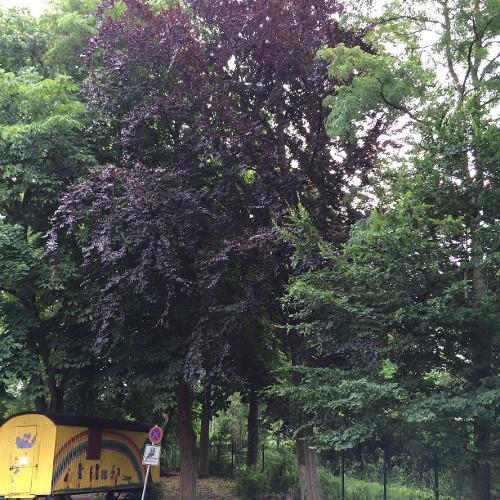 Bäume im Nordertor